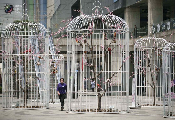 Six giant bird cages containing artificial trees and birds were installed in Nanjing, China to promote environmental friendly concepts to the public.