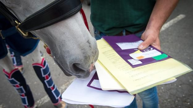 Rio Olympics 2016: How Team GB's horses deal with jet lag, leg room & passports
