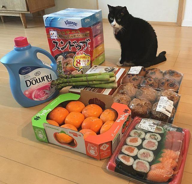 今日は夫がお休みを取ったので夫婦で #コストコ へ。 いつも買う定番のものが殆どですが、フレンチトースト味のマフィン初めて買ってみました。 これから切って冷凍します。 #猫 #ねこ #cat #ねこ部 #元野良猫 #保護猫 #黒猫 #デブ猫 #愛猫 #日本猫 #はちわれ #クロ #tuxedocat #catstagram #コストコ #コストコ購入品