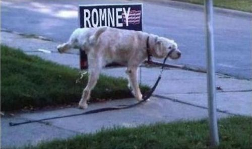 """This is totally disrespectful.  And by """"disrespectful,"""" I mean hilarious.: Awesome Animal, Politics 2012, Obama 2012, Animal Stuff, Smart Dogs, 2012 Election, Romney, Funny Stuff, Humor"""