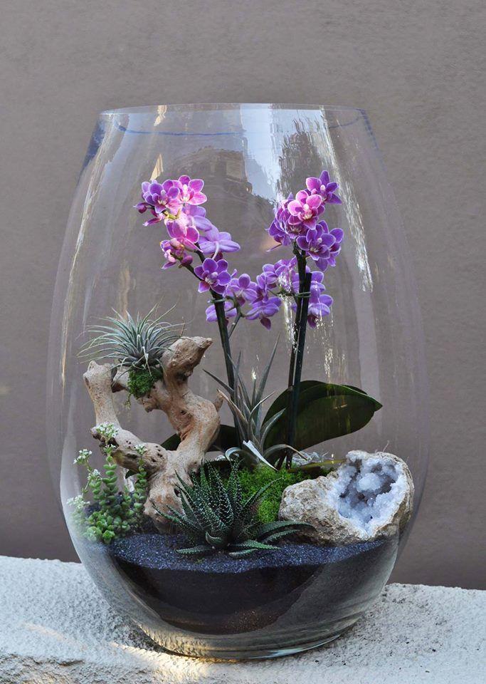 Orchid Air Plant Terrarium Living Arrangements By Jolana