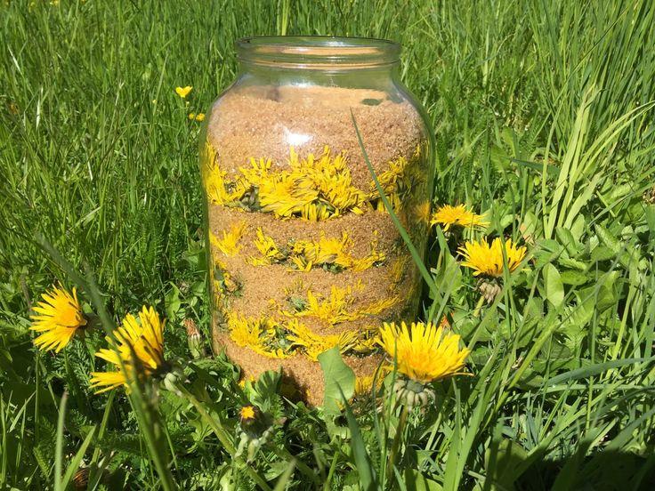 Pampeliškový med nevařený