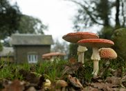 Gallery - The Lost Gardens of Heligan