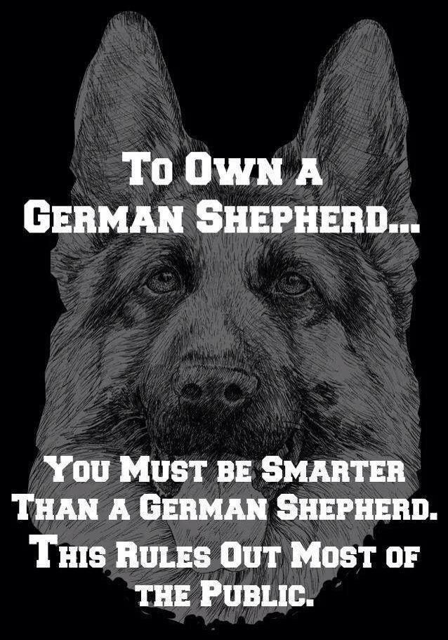 Righteous Information from a guy who has trained GSD's for many years. These Canines are HIGHLY Intelligent.