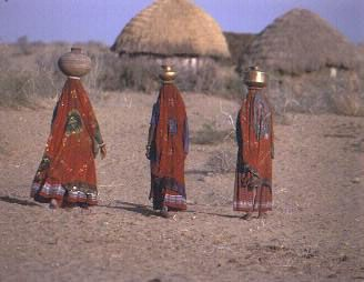 Bishnoi Tribe in India - They never kill animals or cut down trees.