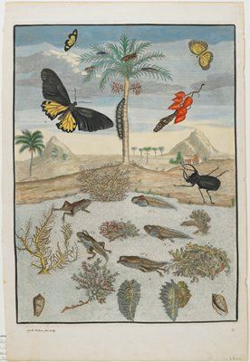 Insects and Fish with Island Background, After Maria Sibylla Merian