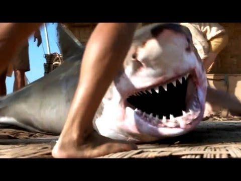 Kon-Tiki Movie Trailer (2013) [for Scandinavian history and amazing story]