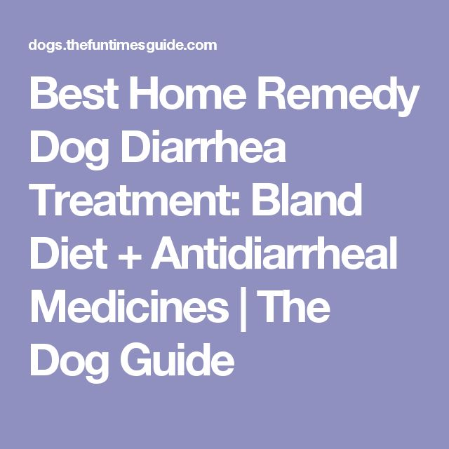Herbal remedy for dog with diarrhea