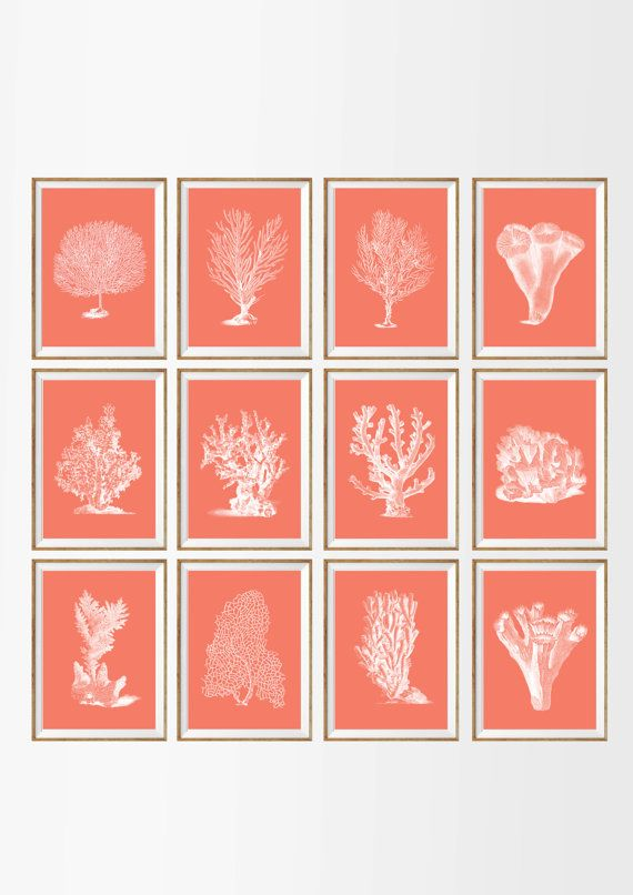 Sea Coral Art Print SET OF 12. A4 UNFRAMED by AntiqueWallDecor