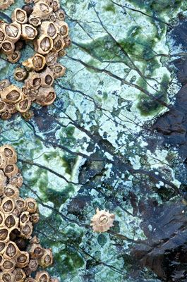 Barnacles 2245, by Andy Small. Love this image - have a print on my bedroom wall!