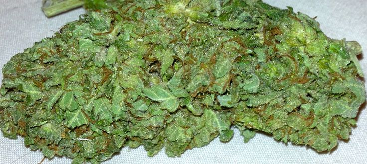 """Bubblegum Kush - Bubblegum x The Kush """"the perfect chronic choice. It sports a sweet candy-like taste mixed in with the traditional indica flavor, making it a good meal topper. Smoke a few joints after lunch or dinner and you'll feel a strong, creative high ... If you are a lightweight, probably better just smoking it in a chilled water bong. BubbleGum Kush induces a lengthy trippy periods if you take it directly."""""""