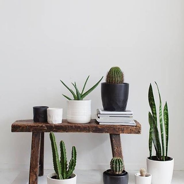 Cactus always add a superb touch to the interior