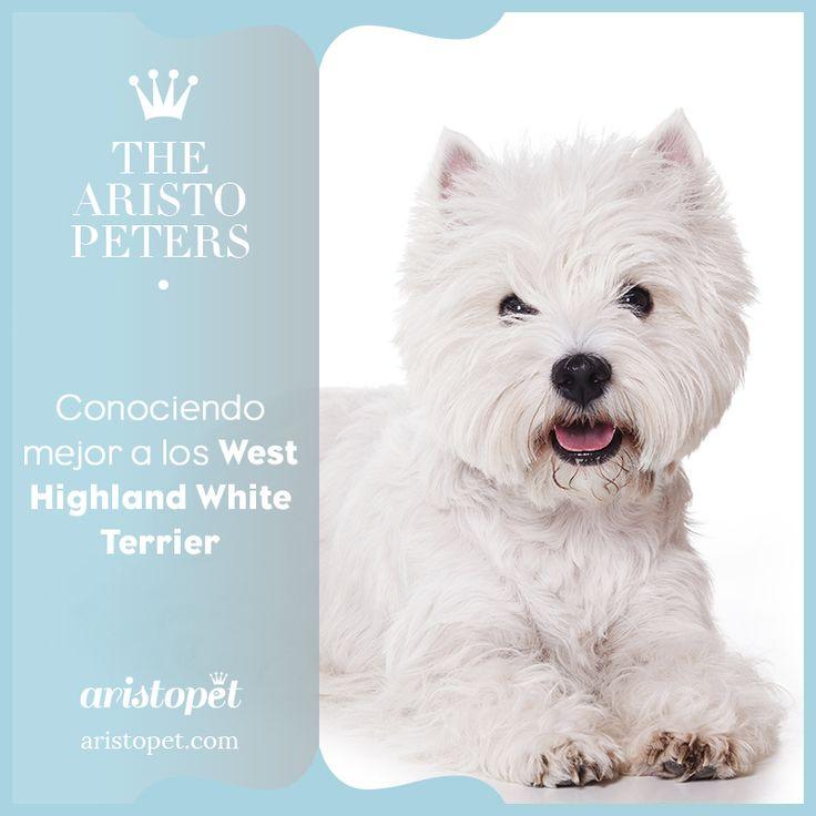 🐶 Los orígenes del West Highland White Terrier se remontan al siglo XIX, a las Tierras Altas del Oeste de Escocia. Hoy, el Westie es una de las razas favoritas en todo el mundo, incluida España, donde es una de las más reconocidas y apreciadas desde hace años. ¿Vives con uno? ¿Cuéntanos su historia? 😀  Aquí más info sobre estos adorados peludos ➡️️  http://bit.ly/2nB9ntH