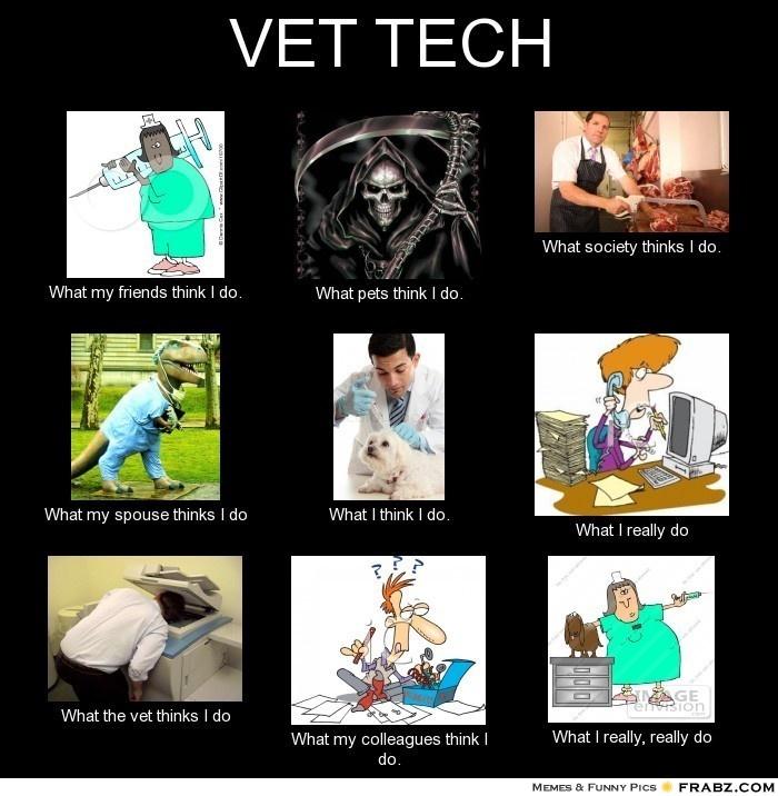 Vet Tech Interpretations 2 'what pets think I do' Vet