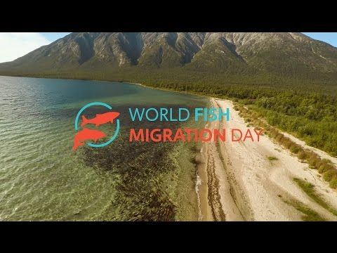 WFMD2016 Fish can't travel like we can - YouTube