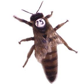 Ordering honey bees online.