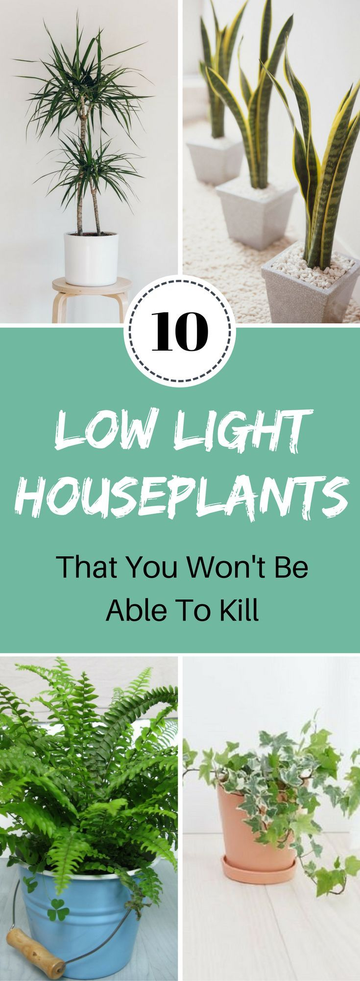 Wow these low light houseplants are awesome for instantly brightening up your living space.  #lowlighthouseplants #houseplants #easyhouseplants