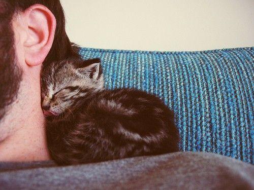 Little ball of love...: Neck Warmers, Cat, Sleepy Kitty, Snuggle, Baby Kittens, Naps Time, Cuddling Buddy, Baby Kitty, Animal