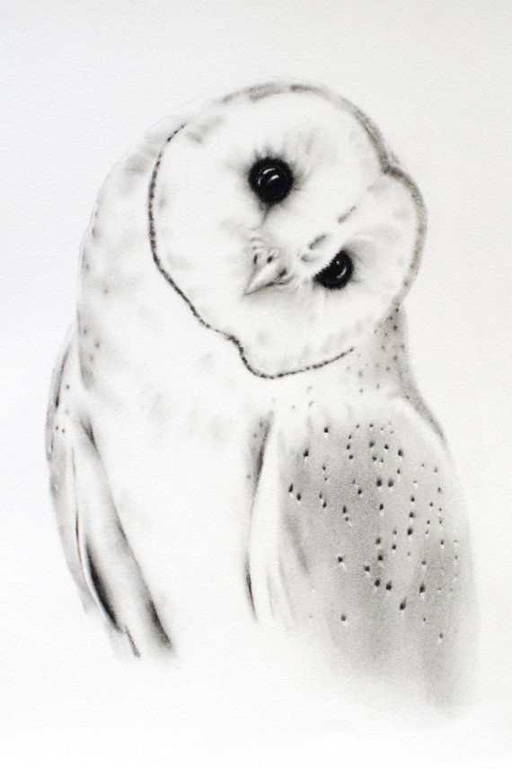 Charcoal Drawing ORIGINAL 11x14, Barn Owl Art, Owl Sketch, Barn Owl Drawing…