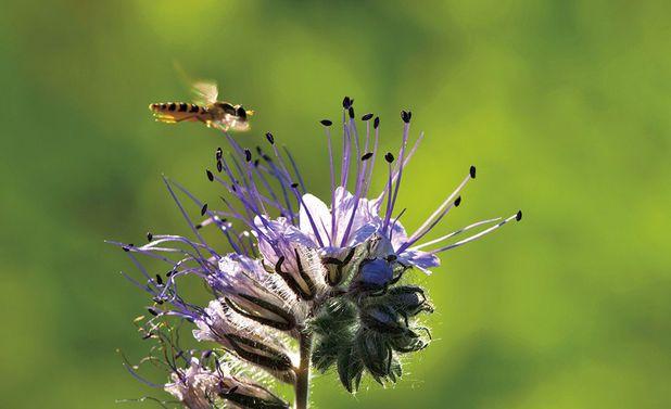 Insekten: Nützlinge im Garten
