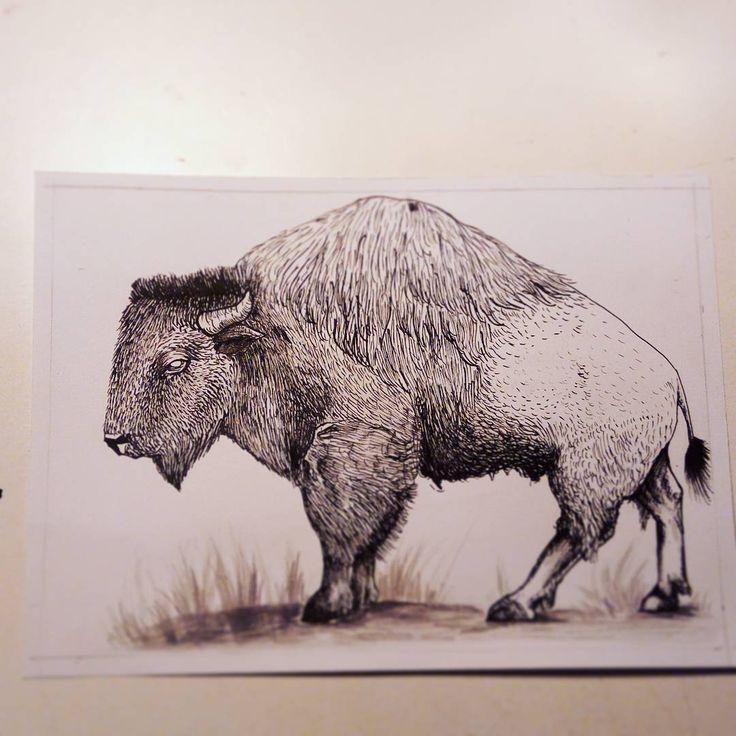 "Páči sa mi to: 46, komentáre: 2 – Natalia A.K.A cipana.natalia (@cipana.natalia) na Instagrame: ""American bison Black ink, fontain pen, wash paint Prints aviliable ⬇⬇⬇⬇⬇⬇⬇⬇⬇⬇⬇⬇⬇ DM #bull #bison…"""