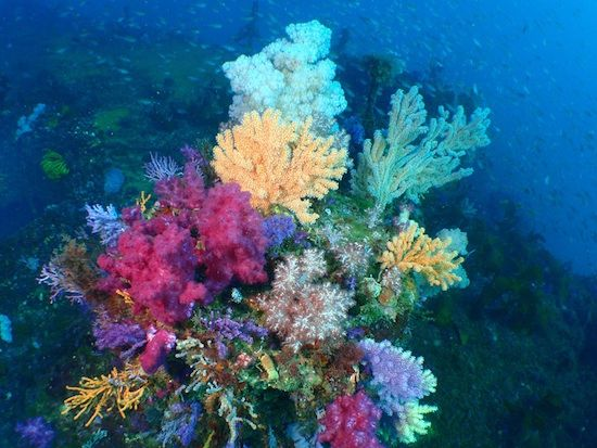 Stunning underwater plants and sea life on the ocean floor ...