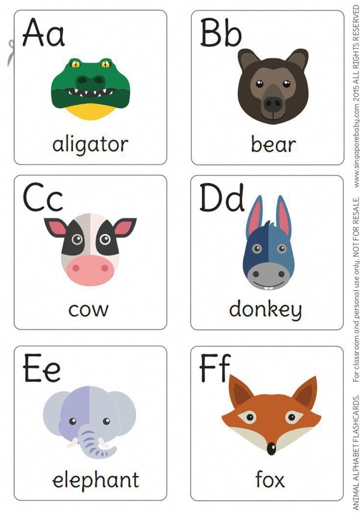 animal flash cards for babies