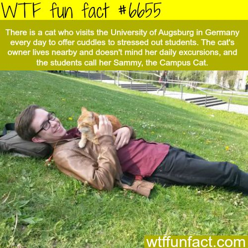 Sammy, the Campus Cat - WTF fun fact