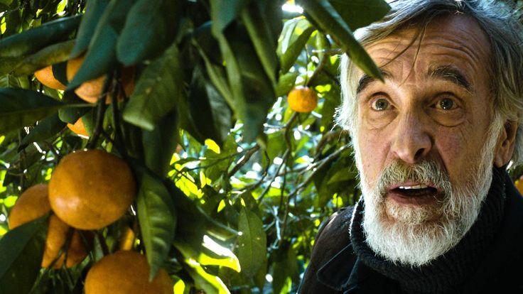 Tangerines - Movie Trailer