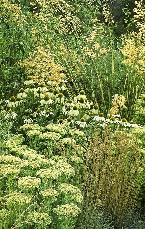 Acres Wild planting design with sedum, stipa, echinacea