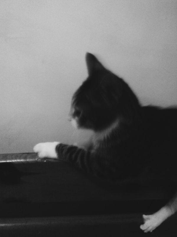 #cat #fun #vscopoland