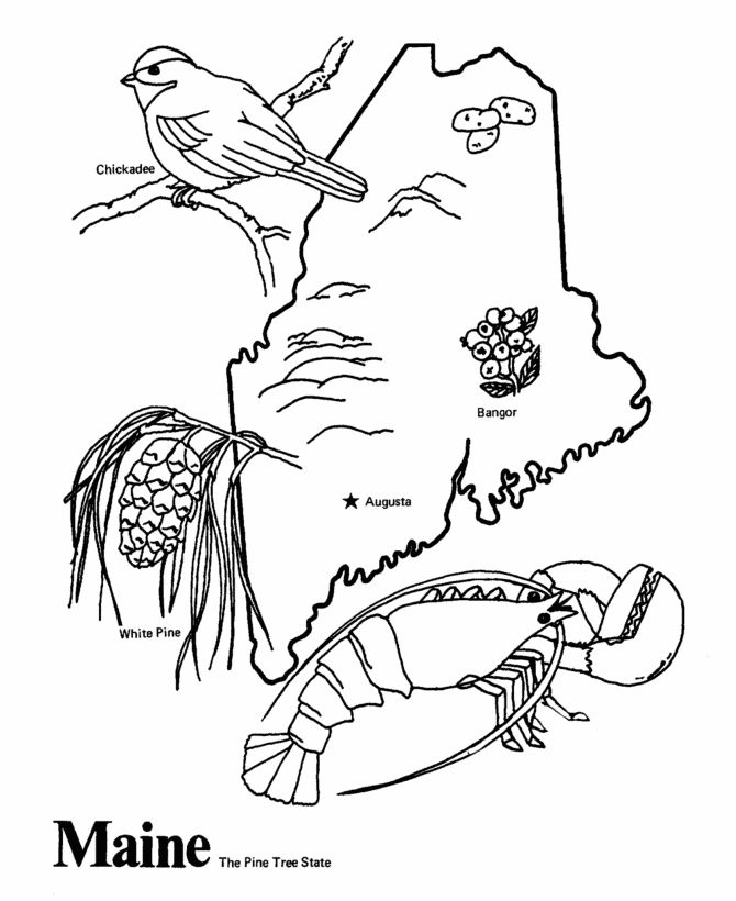 50 States Coloring Pages