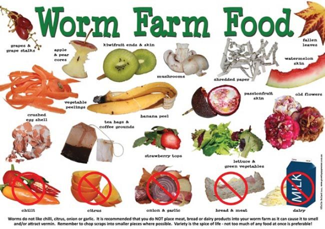 Worm Farm Food - A3 Poster