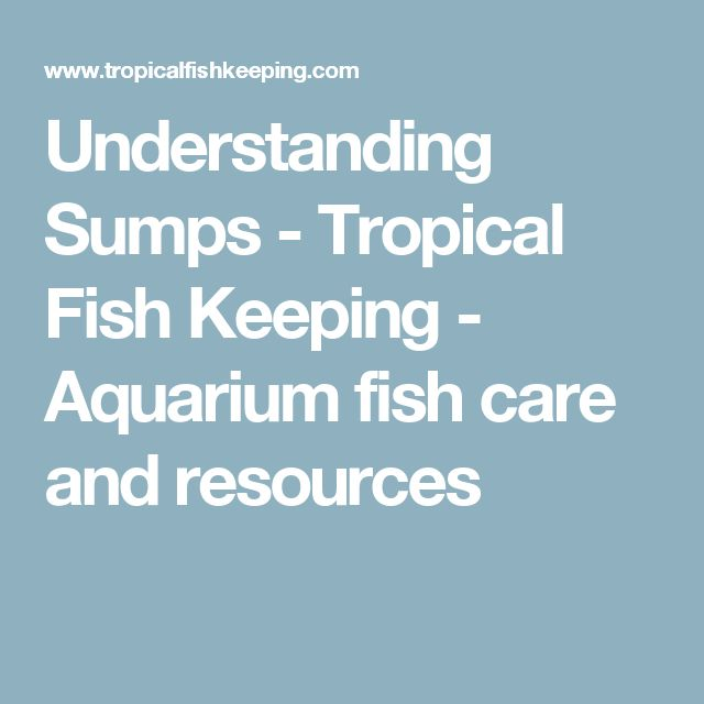 Understanding Sumps - Tropical Fish Keeping - Aquarium fish care and resources