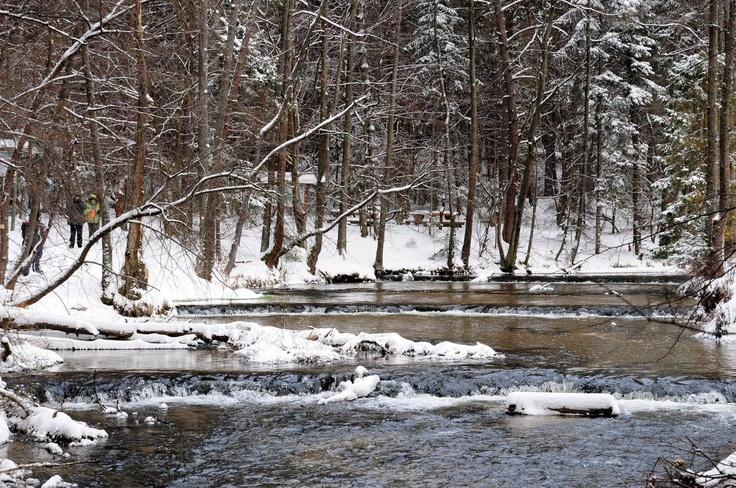 Zima na szumach/Winter on Tanew River
