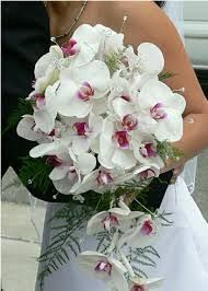 Orchids http://www.a1ahmedabadflowers.com/flowers/send-orchids-ahmedabad.html