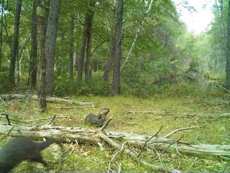 Otters-Jackson County