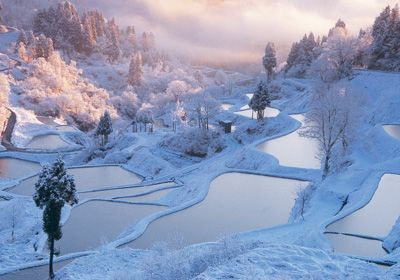 Japan - Terraced rice fields in winter, Toka-machi, Niigata