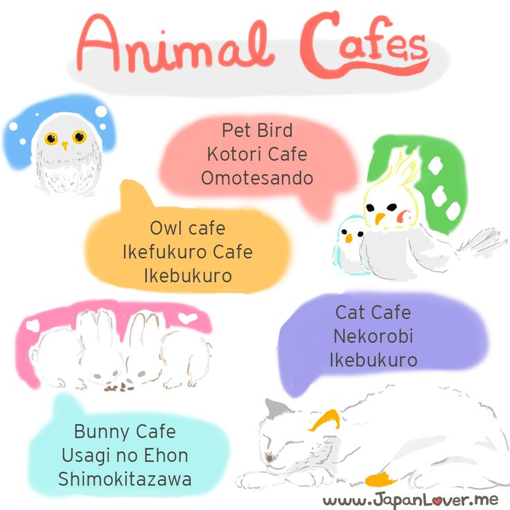 Sigs Japan Report #9: Animal Cafes in Japan