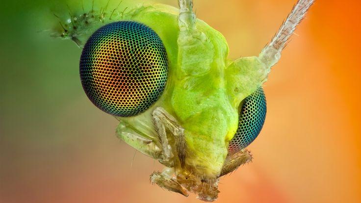 El compuesto de insectos macro ojo Fondos de pantalla ...