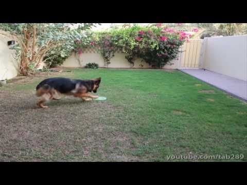 Dog Training Tutorial: Off-Leash Exercise (Send-Off) - YouTube