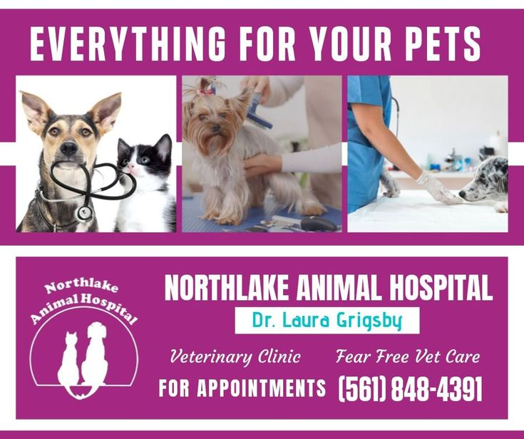 Emergency Animal Hospital Urgent Care Near Boca Raton Fl With