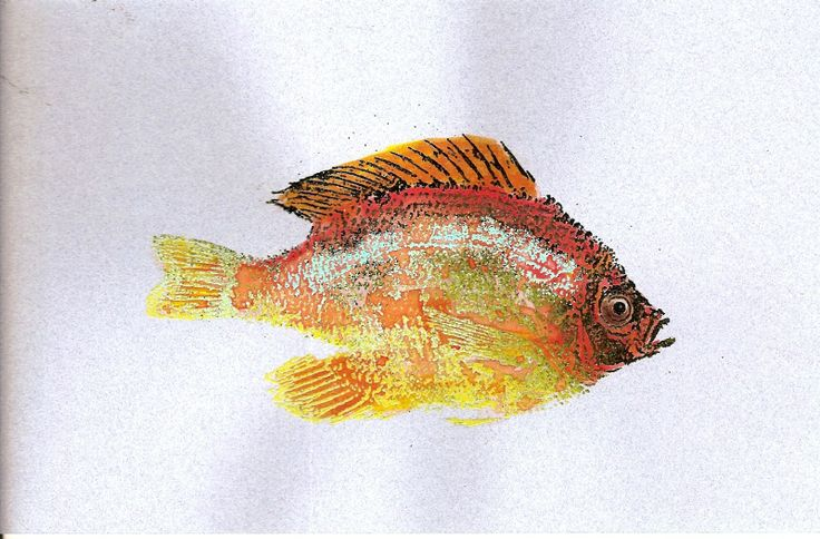 27 best images about fred mullett on pinterest coloring for Fred the fish