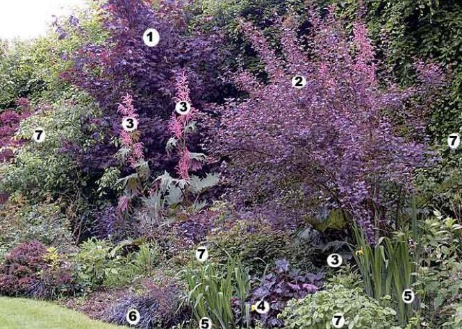 1000 id es sur le th me plantes de r sistantes de for Entretien iris jardin