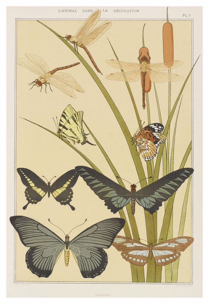 'Papillions' by Maurice Pillard Verneuil (1869–1942) a French artist and decorator in the Art nouveau movement. From the book 'L'animal dans la decoration' (The animal in decoration). http://www.capitalcollections.org.uk/index.php?a=ViewItem&i=27741&WINID=1423614173976