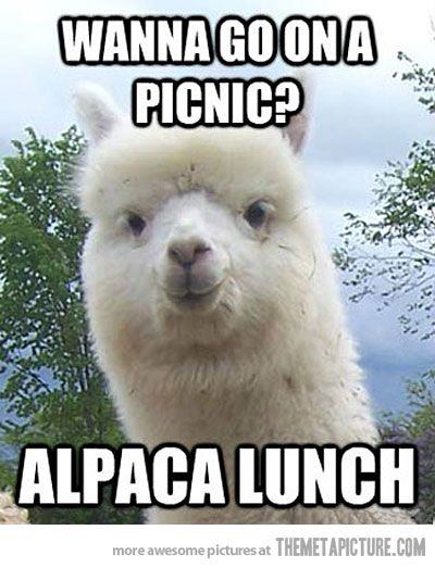 DYING.: Laughing, Flames, Alpacalunch, Jokes, Puns, Animal Humor, Alpacas Lunches, Picnics, Funnies Stuff
