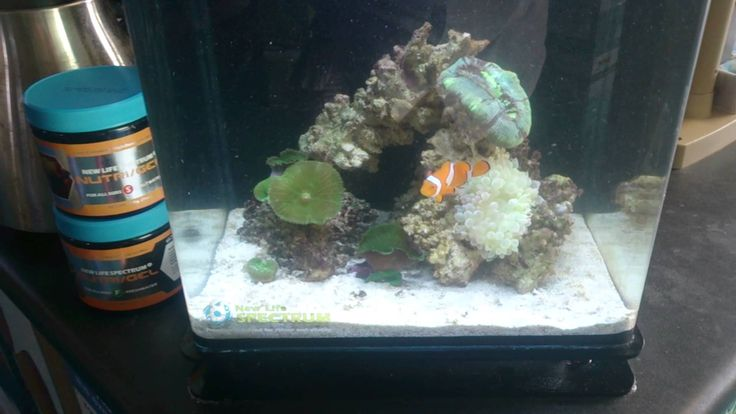 14 best images about nano reefs on pinterest blue and for Aquarium recifal nano