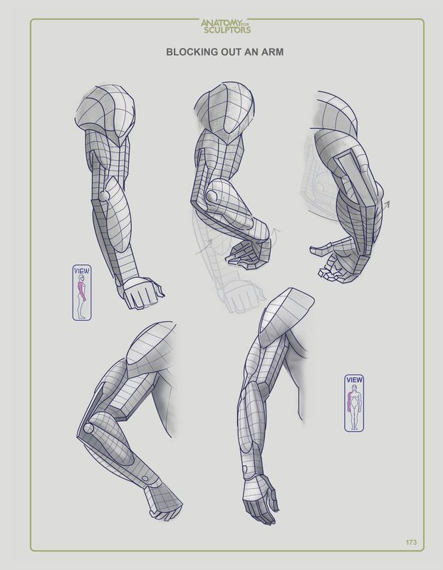 The 87 best anatomy images on Pinterest | Human anatomy, Anatomy ...