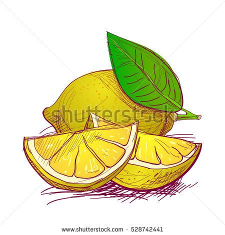 Lemons are hand-drawn. Vector color illustration of the fruit.
