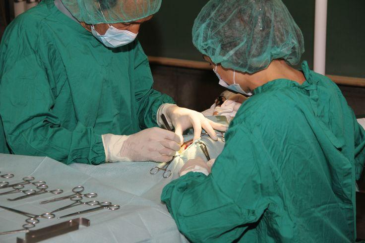 Apoio cirúrgico em Técnicas de Enfermagem Veterinária. | Assisting surgery on Veterinary Nursing Techniques. © Serviços de Imagem IPB
